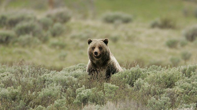 20160915 bear2.jpg