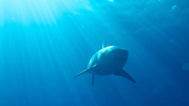 20160808-sharkattack02.jpg