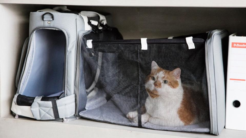 災害時にペットと一緒に避難する準備はできていますか?リュック型ペットキャリー「GRAMP」