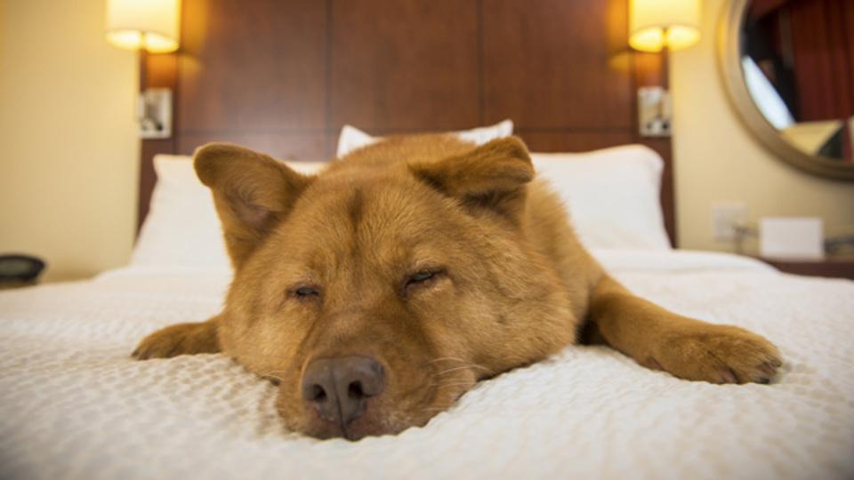 【週末に寝だめしたい人のための睡眠診断】会社に行くのがつらいのは「眠り方が不規則」なせいかも...