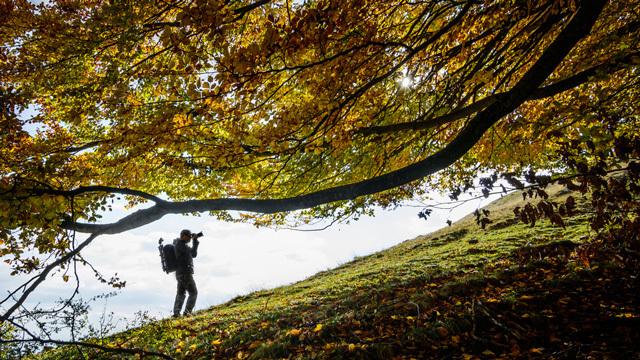 一眼やスマホで紅葉を綺麗・鮮やかに撮るなら「PLフィルター」の使用がオススメほか〜木曜のライフハック記事まとめ