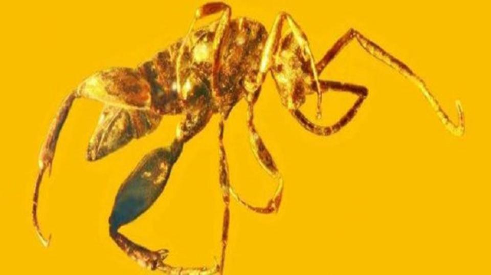 恐竜時代、バッタのように跳ねるハチがいたらしい