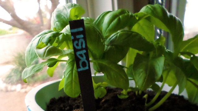 寒い季節に備えて鉢植えを室内に移すときのTips