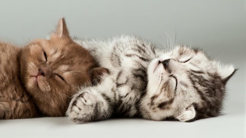 ネコ動画が好きな人はどんな性格なのか:研究結果