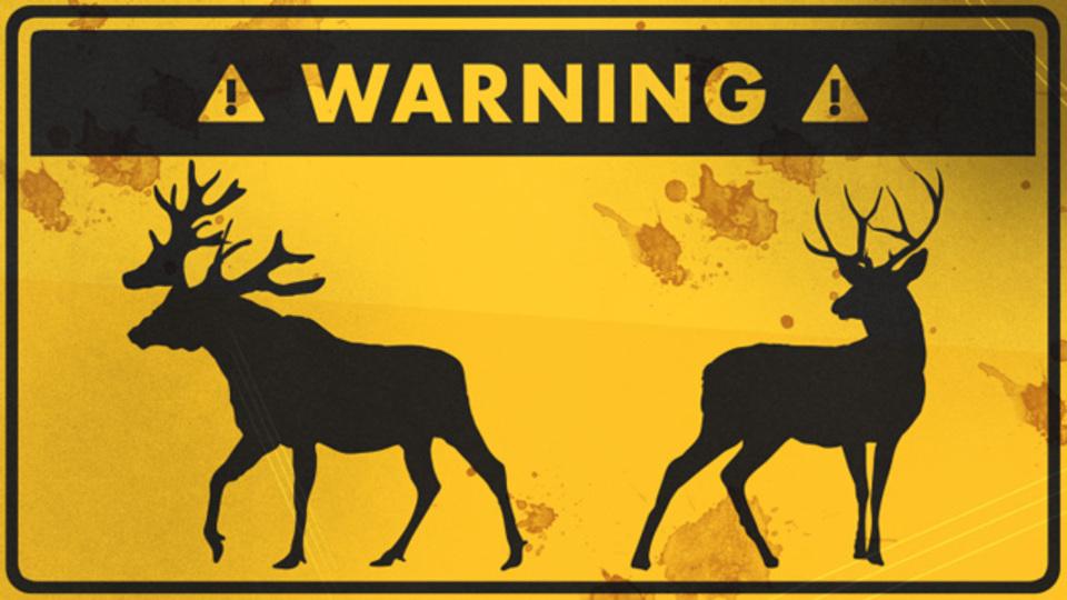 野生の鹿やヘラジカ(ムース)に遭遇したときの対処法