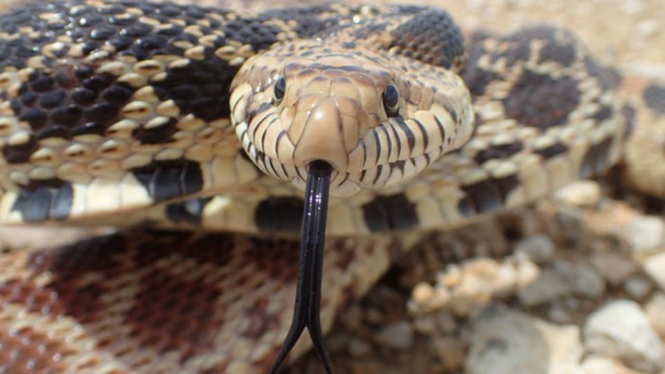 人間にはヘビを素早く見つける視覚システムが備わっている?