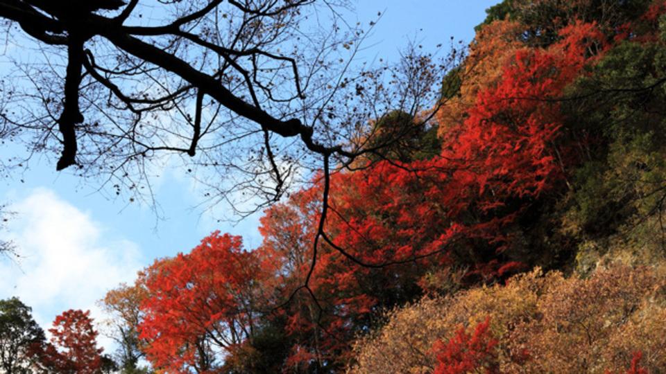 東京近郊の綺麗な紅葉の名所44選ほか〜木曜のライフハック記事まとめ