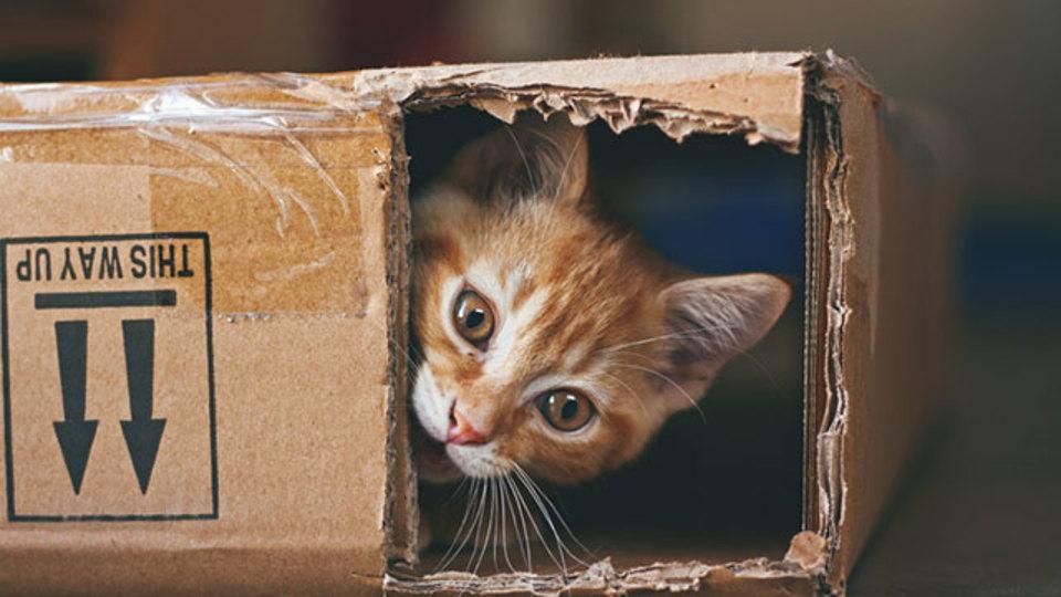 空箱が猫へのプレゼントにぴったりな理由