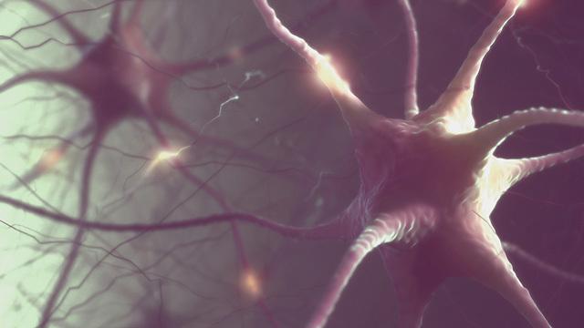 65歳を過ぎても脳機能は20代、「スーパーエイジャー」たちが習慣にしているアクティビティ4つ