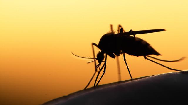 「病気」はハックできるか? マラリアへの対策方法を探るハッカソンが開催される