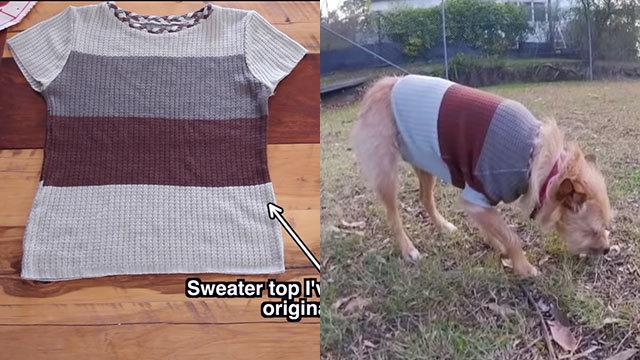 飼い主のお下がりで愛犬のセーターを作る方法