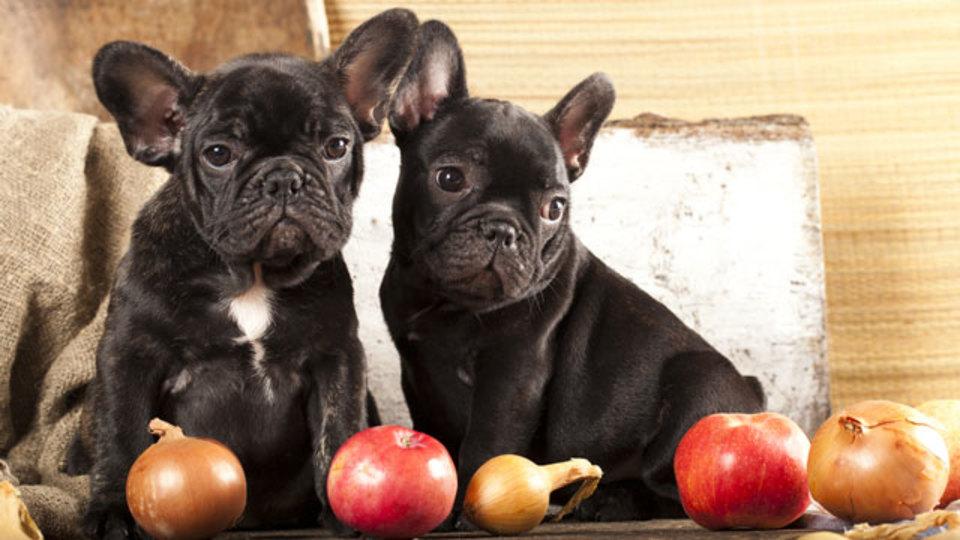 それ、愛犬に食べさせて大丈夫? 「犬に食べさせていいもの&悪いもの」まとめ