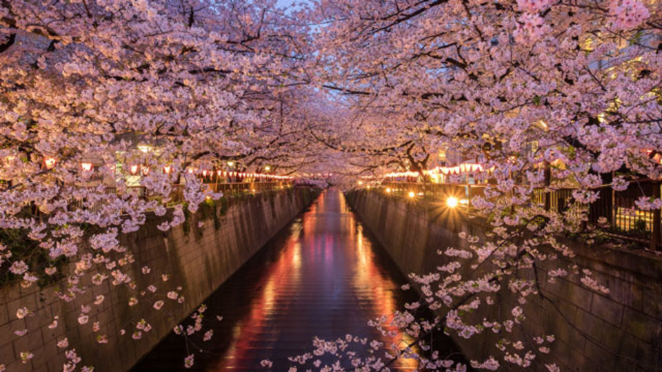 部門別【お花見・東京】ライトアップから穴場まで5年通った桜の名所ほか〜木曜のライフハック記事まとめ