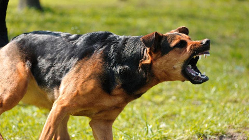 元特殊部隊員が教える犬の攻撃から身を守る術