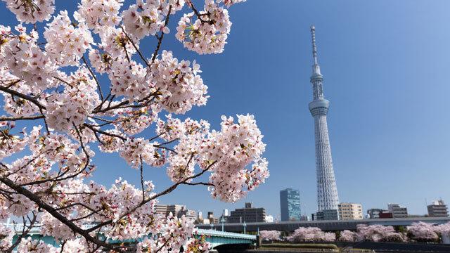 東京 お花見・桜の見えるレストランの人気13店【穴場あり】ほか〜木曜のライフハック記事まとめ