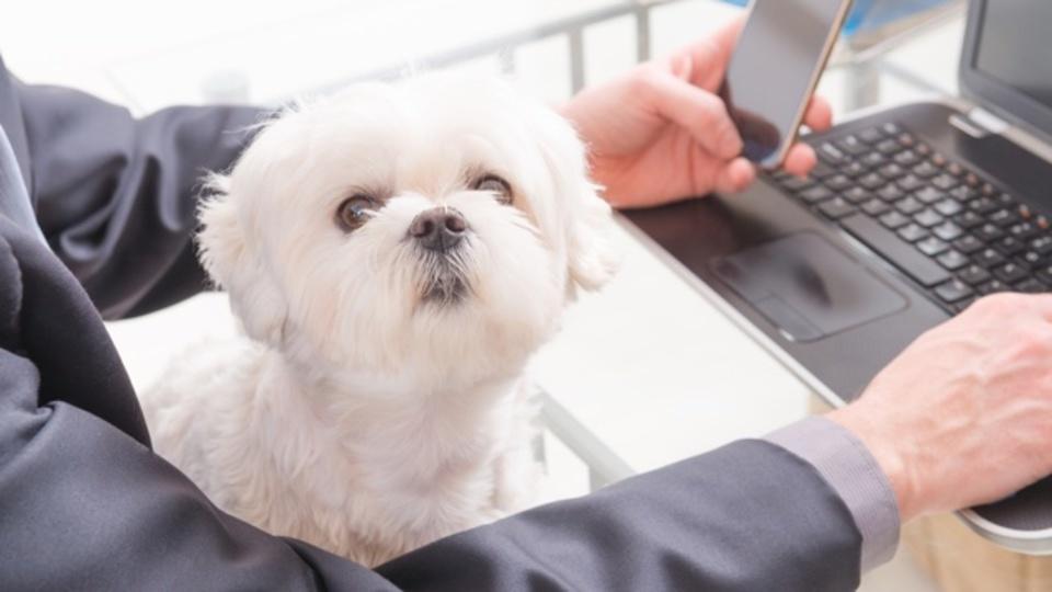犬に優しいオフィスがもたらすメリット