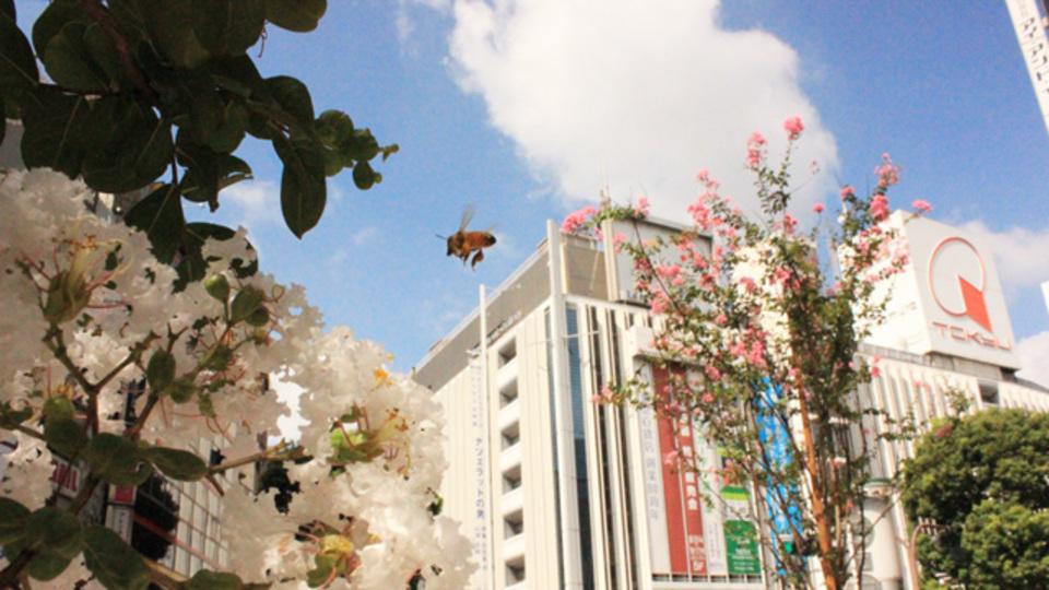私たちが渋谷で「ミツバチ」を飼い始めた理由
