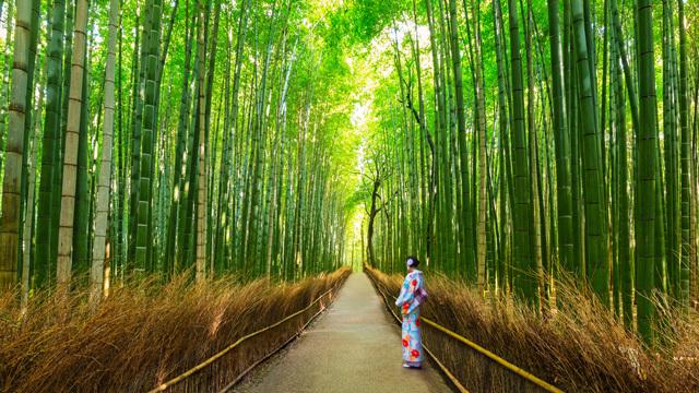 GWの京都でもゆったり過ごせる!地元民が教える雰囲気抜群の穴場スポット12選ほか〜木曜のライフハック記事まとめ
