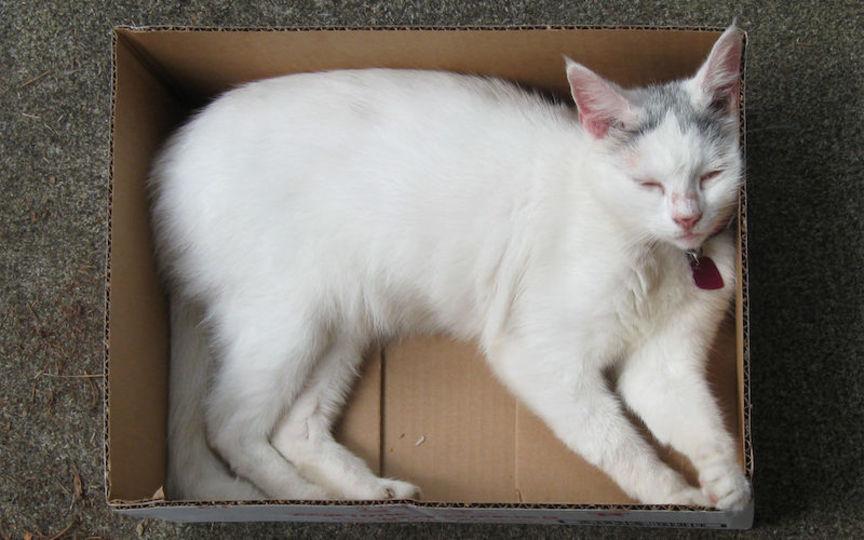 猫が狭いスペースに入り込むのが好きな理由