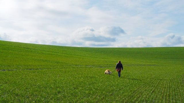 犬を飼うと健康になる:研究結果