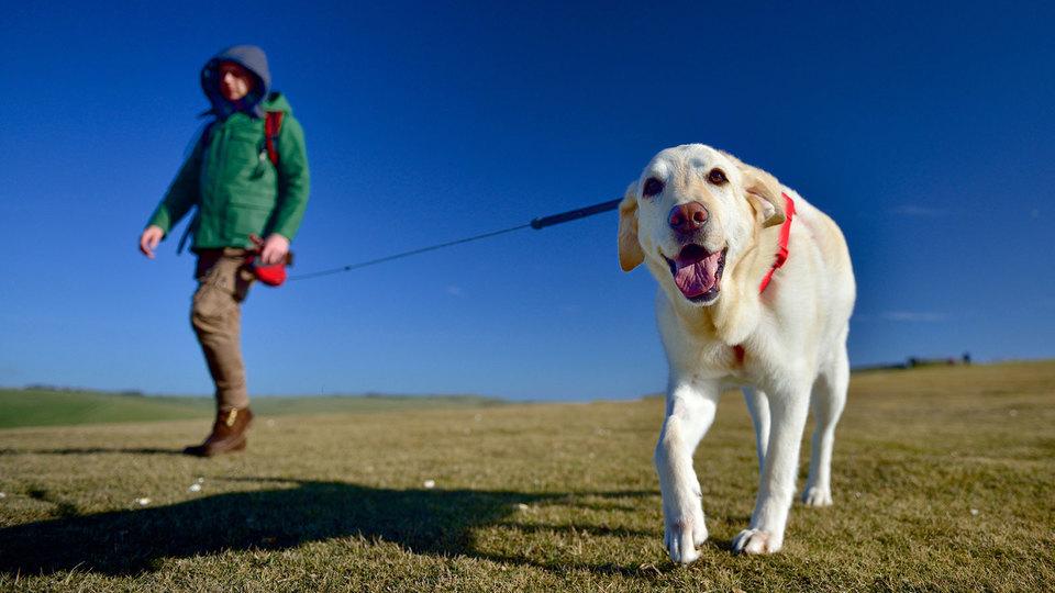 愛犬の散歩中、よその犬と挨拶させない方が良い理由