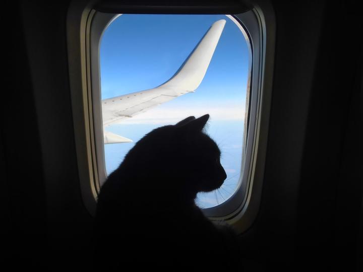 ペットを飛行機に乗せるときの10の注意点