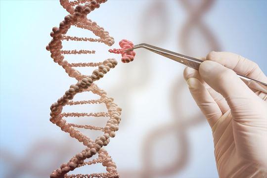 ゲノム編集で「がん細胞の分裂の抑制」に成功