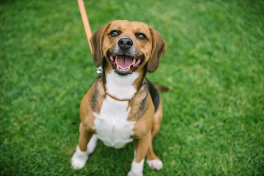 愛犬のリードは従来のタイプと最新の巻き取り式、どちらにすべきか