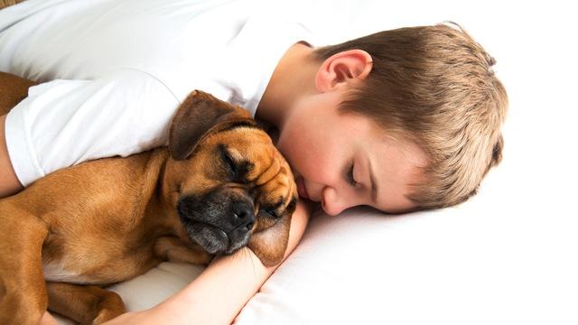 子どもと一緒に飼いたい犬種と選ぶときの注意点