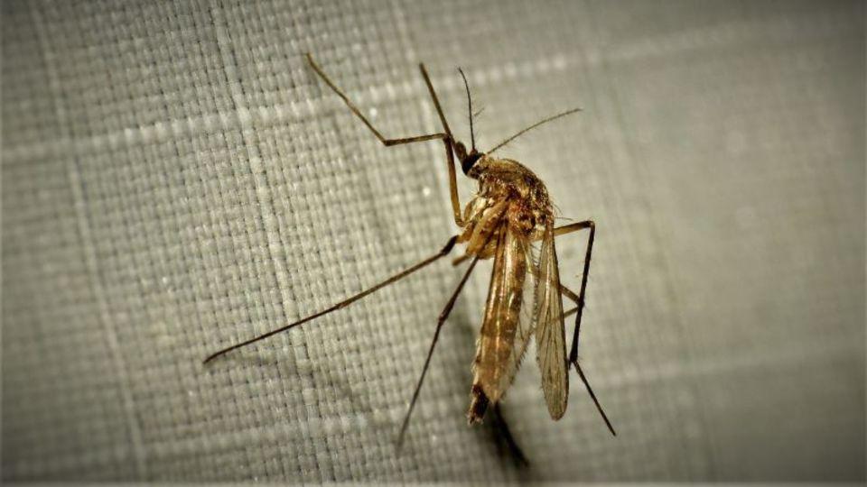 秋の安眠を妨げる蚊を退治する2つの方法