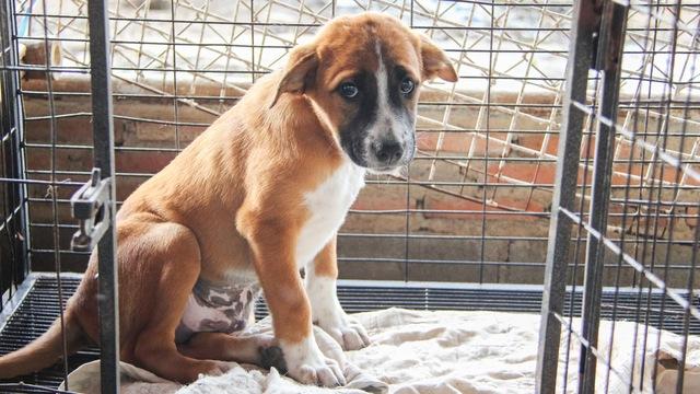 愛犬を飼えなくなったとき、どうしたらいいのか
