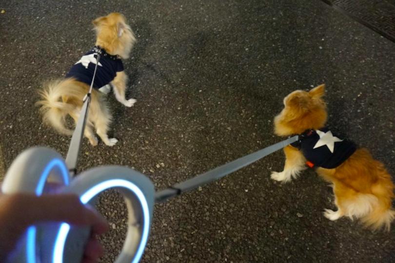 犬の散歩から健康管理をテクノロジーで可視化する。アプリ連動のペット・リード「GO」