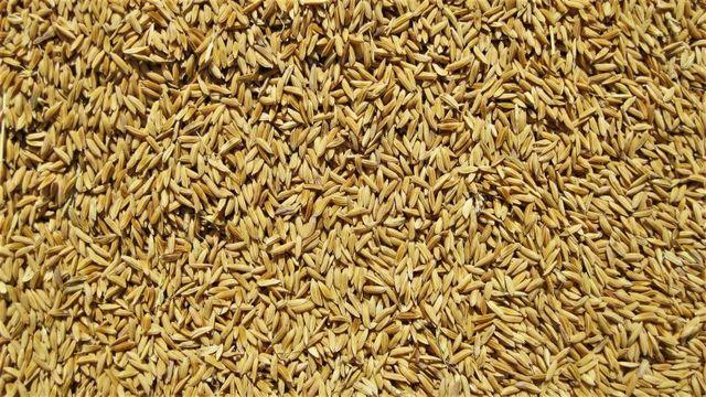 玄米は白米よりもどれくらい健康なのか?