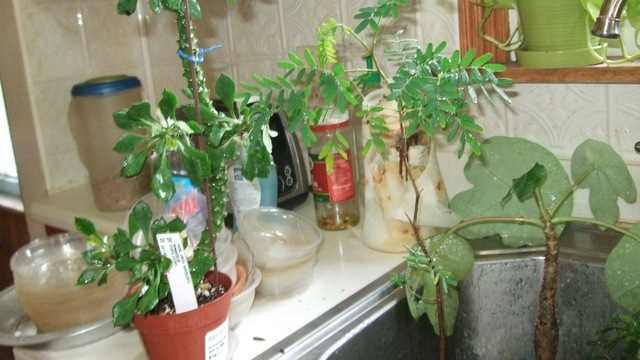 年に2回でいいから、屋内の植物の葉っぱをチェックしてあげて