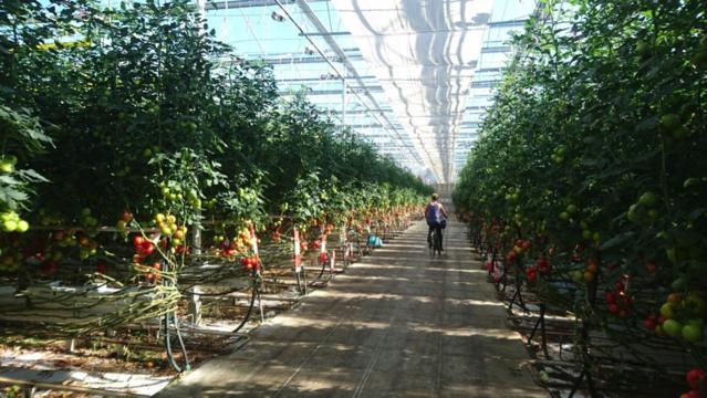 持続的で合理的。オランダに移住した農業トランスレーターが語る、オランダの5つの魅力