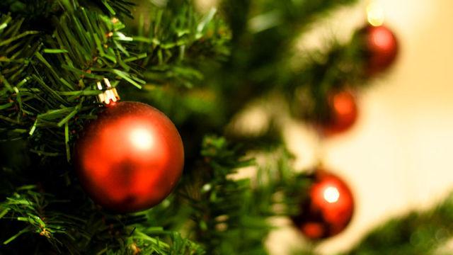 クリスマスまでモミの木のツリーを枯れさせない5つのTips