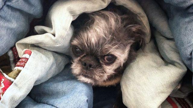 毛布にくるまって寝る犬、かわいいけど窒息しないの?
