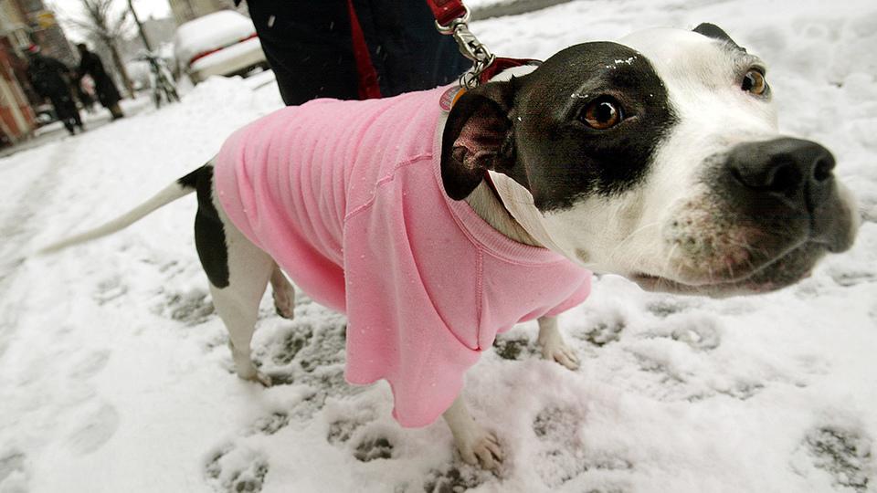 命の危険も。寒い冬は犬の散歩に注意しましょう