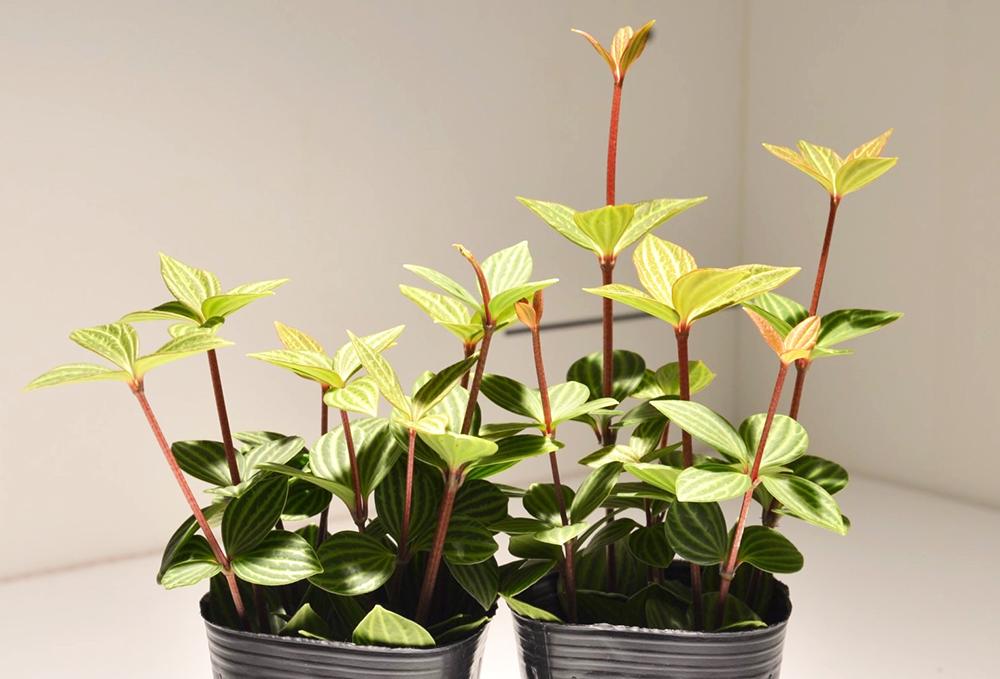 hacknewlife-foliage-plant13