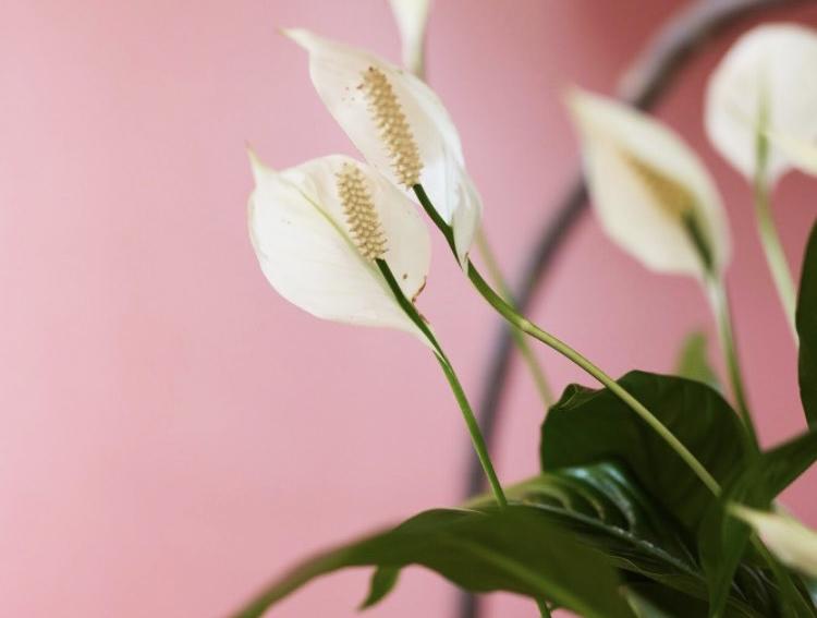 hacknewlife-foliage-plant16