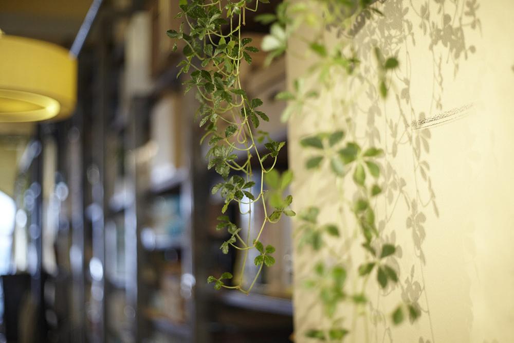 hacknewlife-foliage-plant19