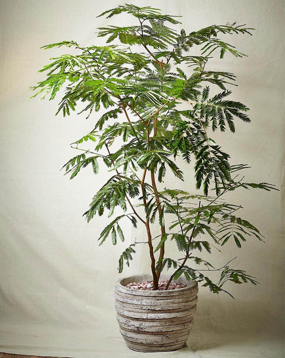 hacknewlife-foliage-plant21