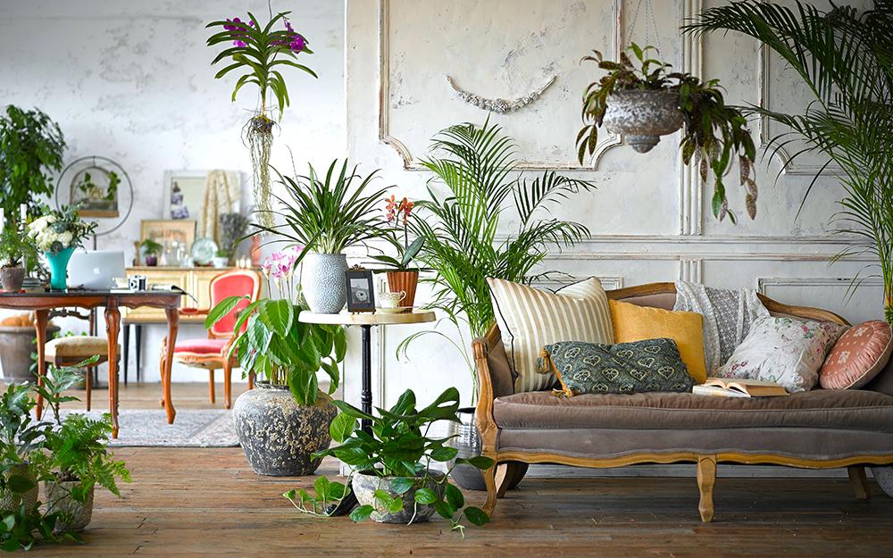hacknewlife-foliage-plant30