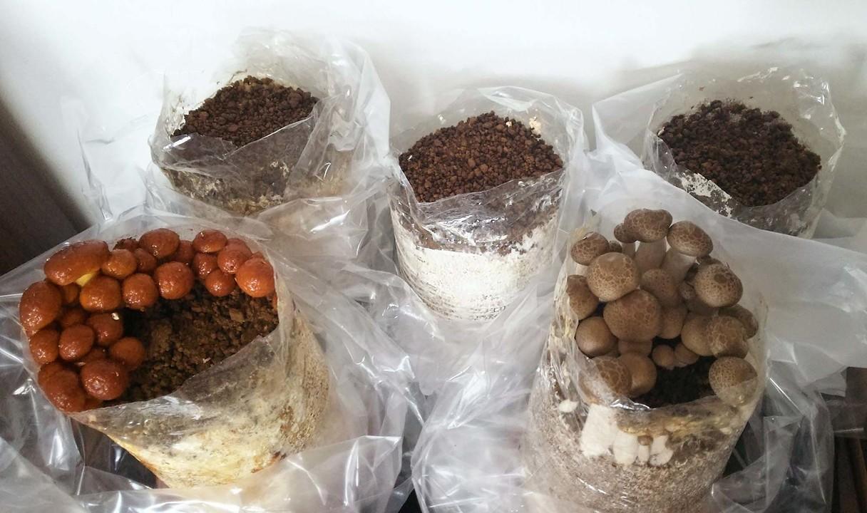 キノコ栽培キット5種を比べてみた