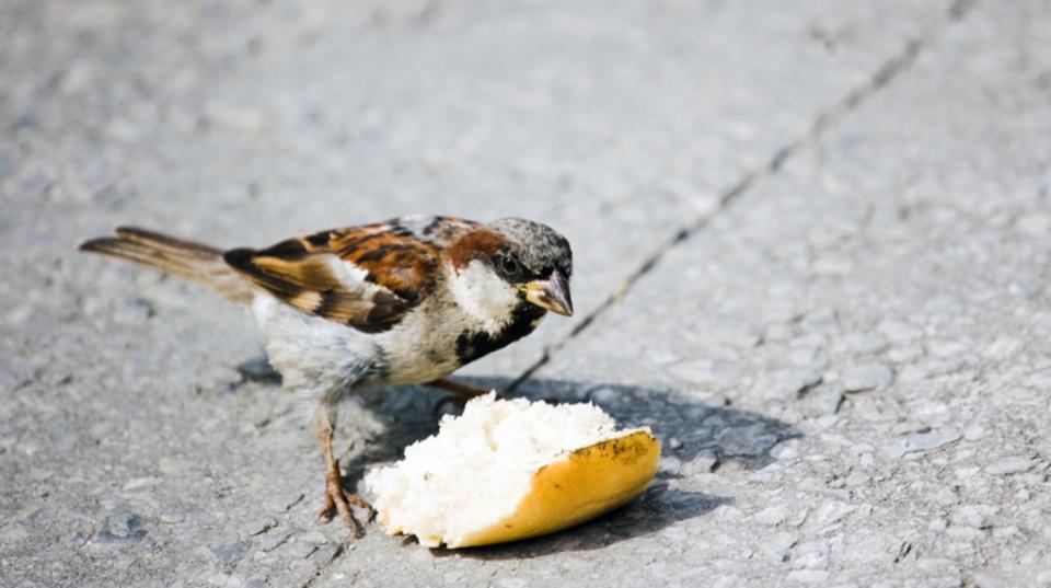 鳥に餌付けしてはいけない理由|パンは体に毒である | ライフハッカー ...