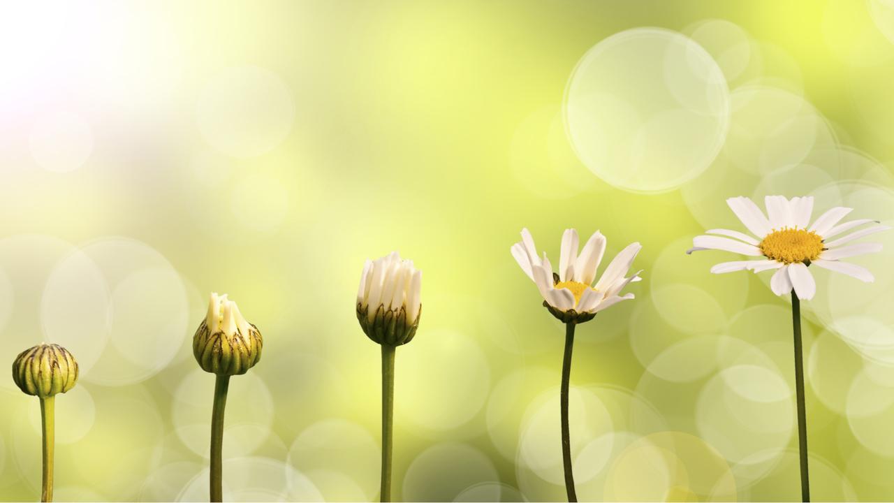 花の成長過程