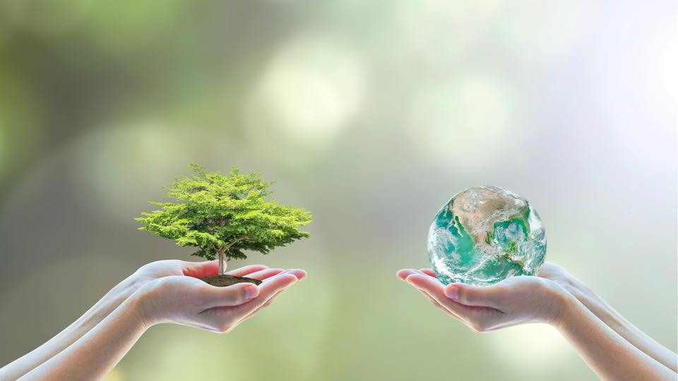 木と水を掲げる手