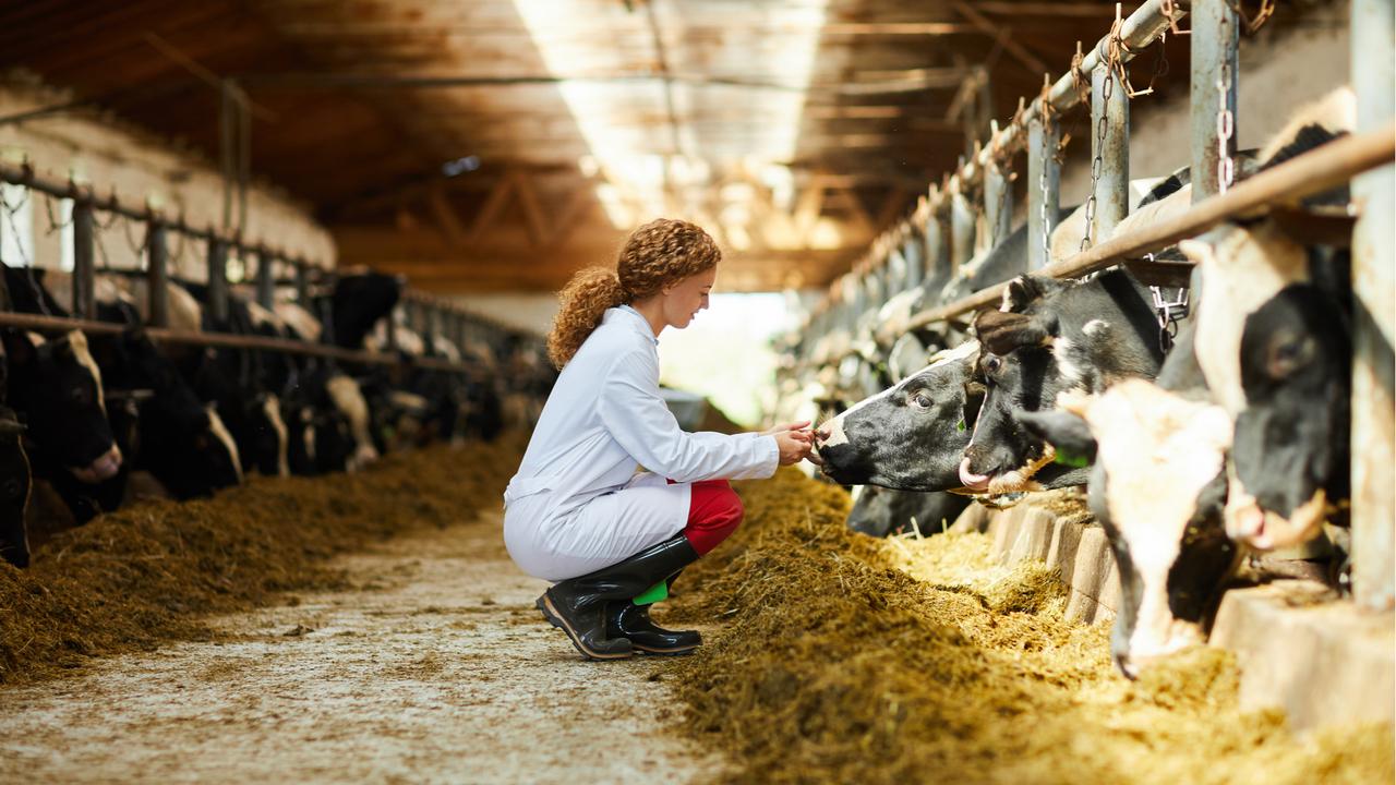 家畜の点検を行なう女性