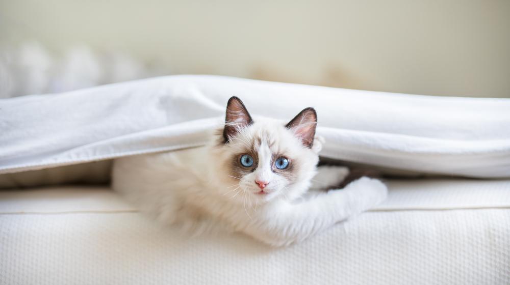 こっちを見る白猫