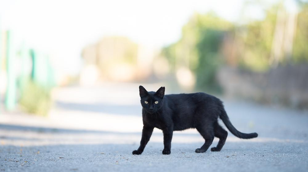 外を歩く黒猫